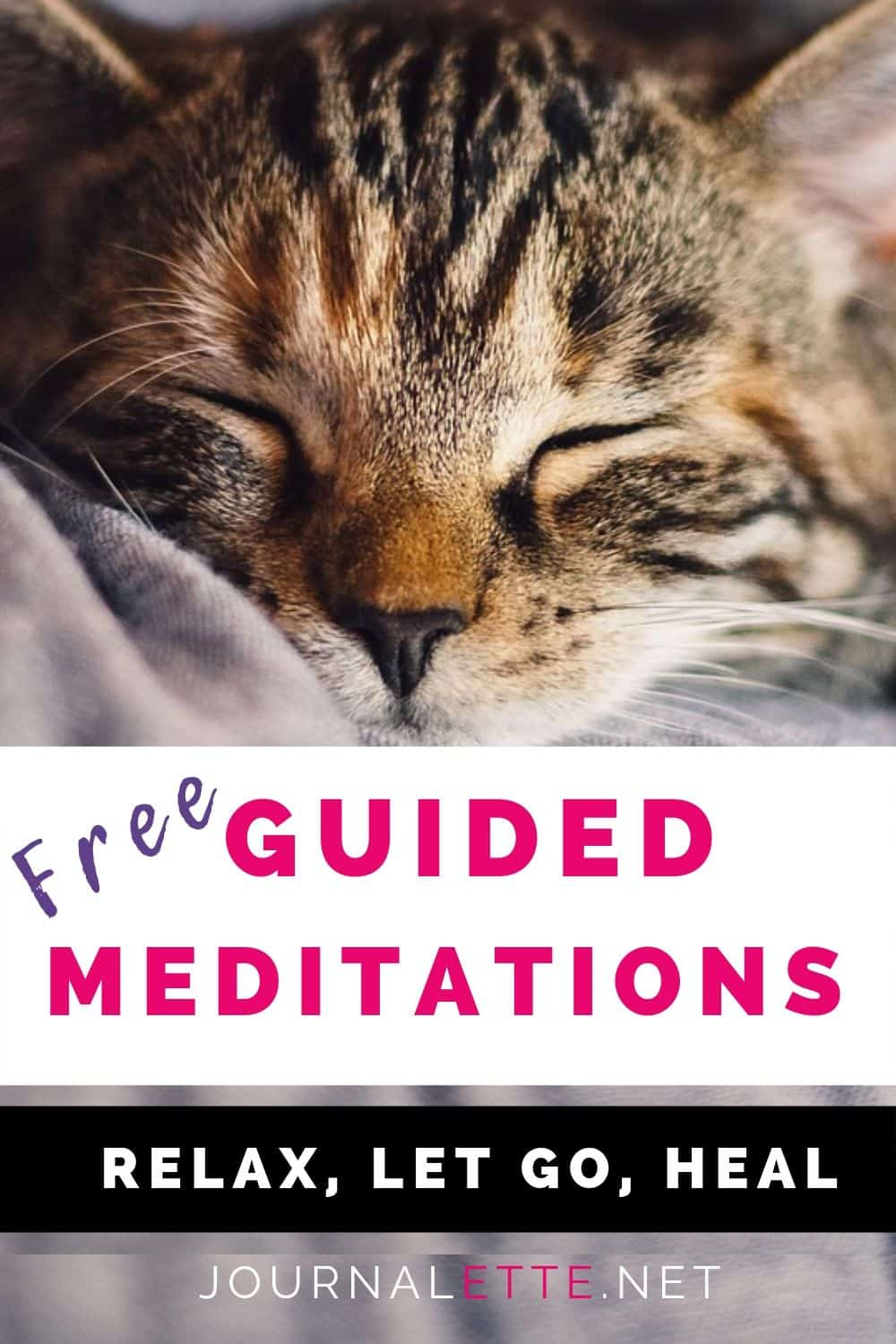 image of cat with text overlay free guided meditations relax let go heal