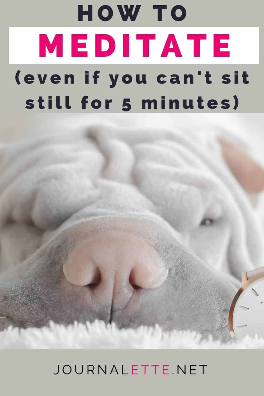 image of animal with clock and text overlay how to meditate even if you can't sit still for 5 minutes
